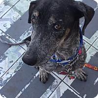Adopt A Pet :: Edna - Redondo Beach, CA