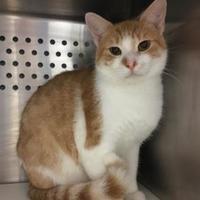 Adopt A Pet :: Rhett - Williamsburg, VA
