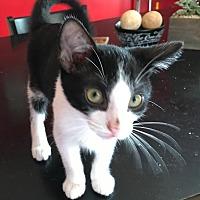 Adopt A Pet :: Tux - Columbus, OH