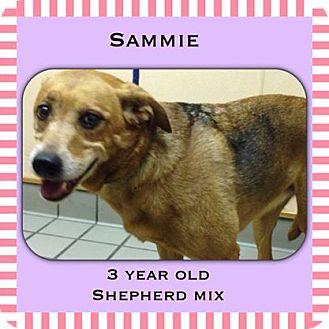 Shepherd (Unknown Type) Mix Dog for adoption in Cincinnati, Ohio - Sammie