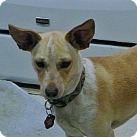 Adopt A Pet :: MAVERICK - Riverside, CA