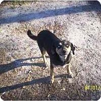 Adopt A Pet :: Blue - HOBOKEN, GA