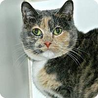 Adopt A Pet :: Heidi - Cheyenne, WY