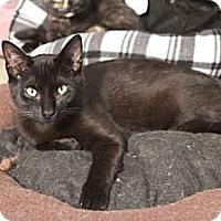 Adopt A Pet :: Weston - Grand Rapids, MI