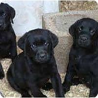 Adopt A Pet :: Winkyn, Blinkyn, and Nod - Antioch, IL