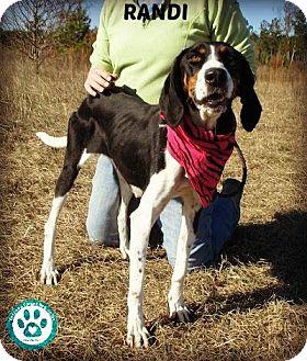 Hound (Unknown Type) Mix Dog for adoption in Kimberton, Pennsylvania - Randi
