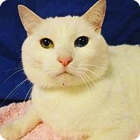 Adopt A Pet :: Bowie - Santa Monica, CA