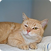 Adopt A Pet :: Angel - Tempe, AZ