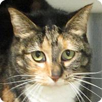 Adopt A Pet :: Lizbeth (Woodbury Petsmart) - Roseville, MN