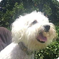 Adopt A Pet :: Happy - Fullerton, CA