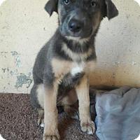 Adopt A Pet :: Aliyah - LAKEWOOD, CA
