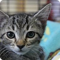Adopt A Pet :: Logan - Sarasota, FL