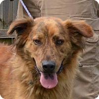 Adopt A Pet :: Scotty - Allentown, NJ