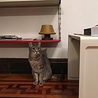 Adopt A Pet :: Gigli and Barbina - Brooklyn, NY