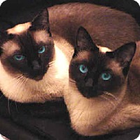 Adopt A Pet :: Apollo and Athena - Morgantown, WV