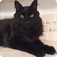 Adopt A Pet :: James - Merrifield, VA