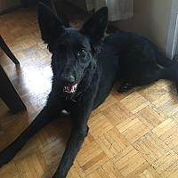 Adopt A Pet :: Landa - Surrey, BC