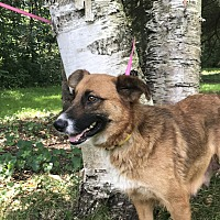 Adopt A Pet :: Alaska - Garden City, MI