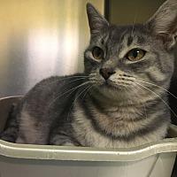 Adopt A Pet :: Winnie - Richboro, PA