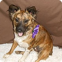 Adopt A Pet :: Paisley - Lockhart, TX