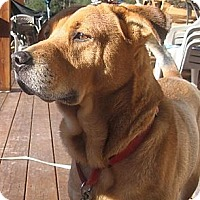 Adopt A Pet :: Faye - Fairfield, CT