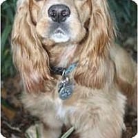 Adopt A Pet :: BJ - Sugarland, TX