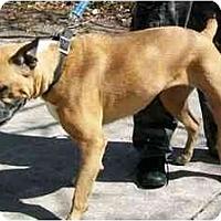 Adopt A Pet :: Ion - Albany, GA