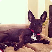 Adopt A Pet :: Lily May - Hagerstown, MD