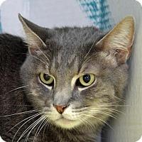 Adopt A Pet :: Chip - Englewood, FL