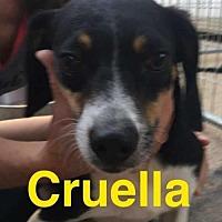 Adopt A Pet :: Cruella - Foristell, MO