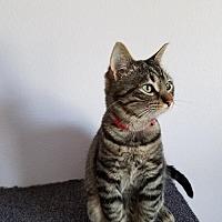 Adopt A Pet :: Egypt - Montello, WI