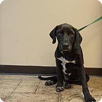 Adopt A Pet :: Jeep - Oviedo, FL