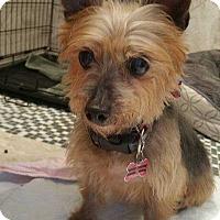 Adopt A Pet :: Lady - Ardsley, NY