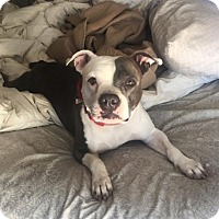 Adopt A Pet :: Hannah, ready to love you! - Sacramento, CA