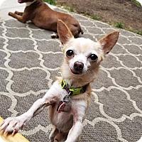 Adopt A Pet :: Parsnip: Adoption Pending - Astoria, NY