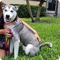 Adopt A Pet :: Isla - Clearwater, FL