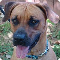 Adopt A Pet :: ODIE - Red Bluff, CA