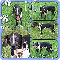 Adopt A Pet :: Lolly meet me 8/4 - East Hartford, CT