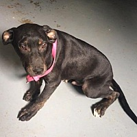 Adopt A Pet :: Ike 17 - Brookhaven, MS