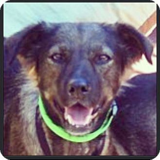 Glen of Imaal Terrier/German Shepherd Dog Mix Dog for adoption in Miami, Florida - Linda