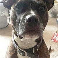 Adopt A Pet :: Maximus - Turnersville, NJ
