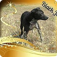 Adopt A Pet :: BlackJack - McKinney, TX