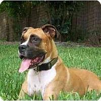 Adopt A Pet :: Murphy - Navarre, FL