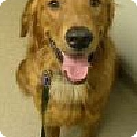 Adopt A Pet :: Grady - St Louis, MO