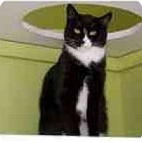 Adopt A Pet :: Mischa - Marietta, GA