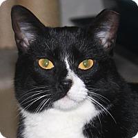 Adopt A Pet :: Millie - North Branford, CT