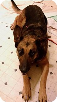 German Shepherd Dog Mix Dog for adoption in Marion, North Carolina - Duchess