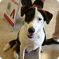Adopt A Pet :: Courtesy Post-Buddy - Scottsdale, AZ
