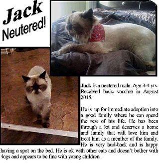 Snowshoe Cat for adoption in THORNHILL, Ontario - Jack