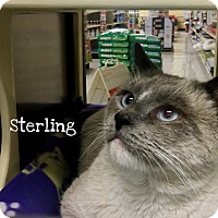 Adopt A Pet :: Sterling - Foothill Ranch, CA